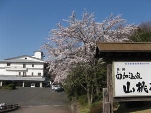 由加温泉ホテル山桃花2
